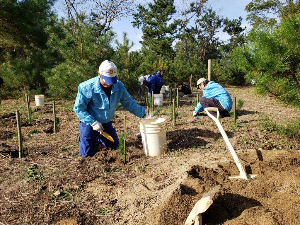 松の植樹活動